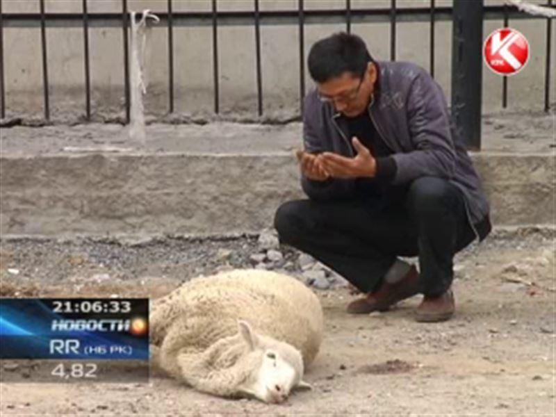 В Казахстане в преддверии Курбан-айта взлетели цены на баранов
