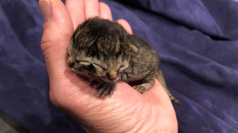 В США на свет появился котенок с двумя мордочками