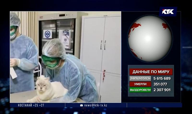 У пятилетней домашней кошки обнаружили коронавирус