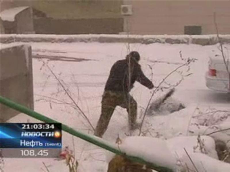 На окраине Усть-Каменогорска бродячая собака до смерти загрызла прохожего