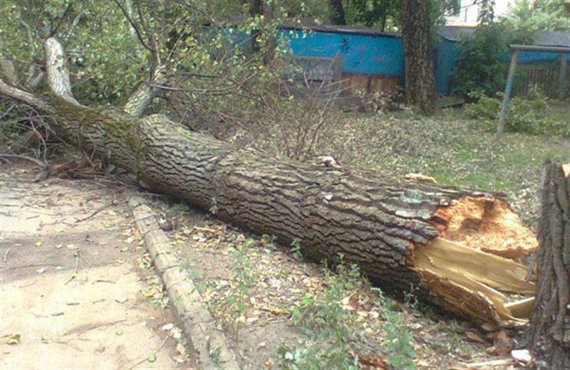 Упавшее дерево убило 16-летнего парня в Павлодарской области