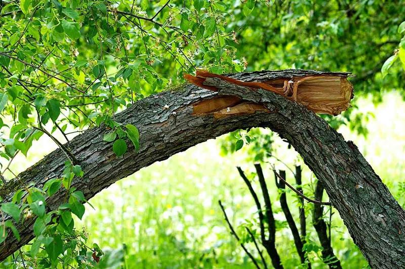 Павлодар: Дүлей дауылда жасөспірім қыршынынан қиылды