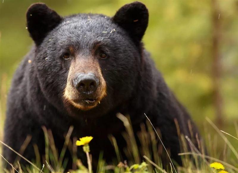 Оштрафовали женщину, пустившую домой дикого медведя
