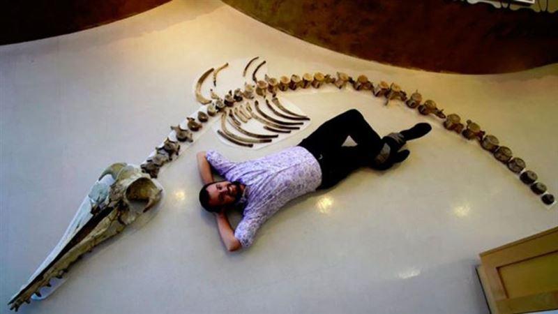 Найден скелет гигантского хищного дельфина