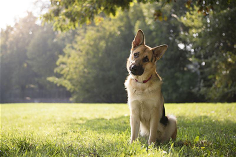 В США скончалась первая заразившаяся КВИ собака