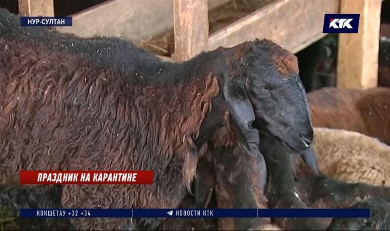 Жертвенных животных подпольно продавали в столице