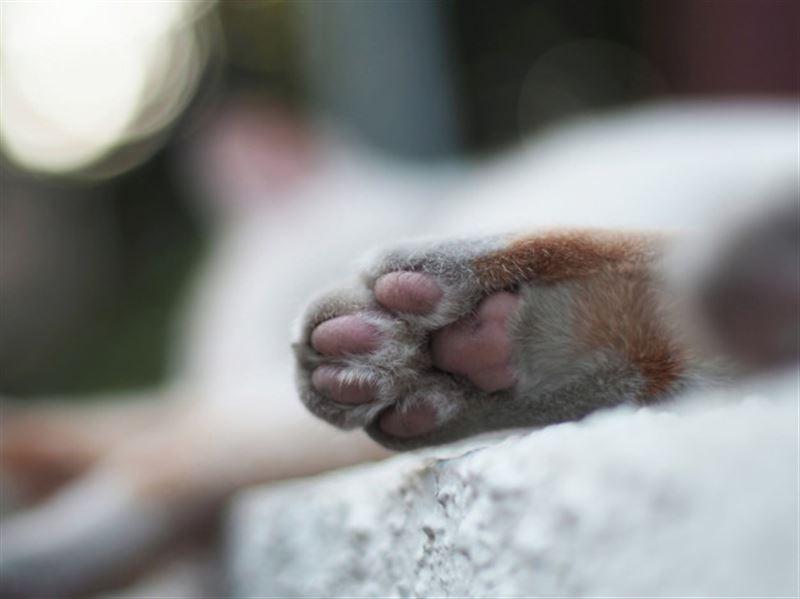 Пытали ножницами и жгли заживо: в Караганде дети до смерти замучили двух котят