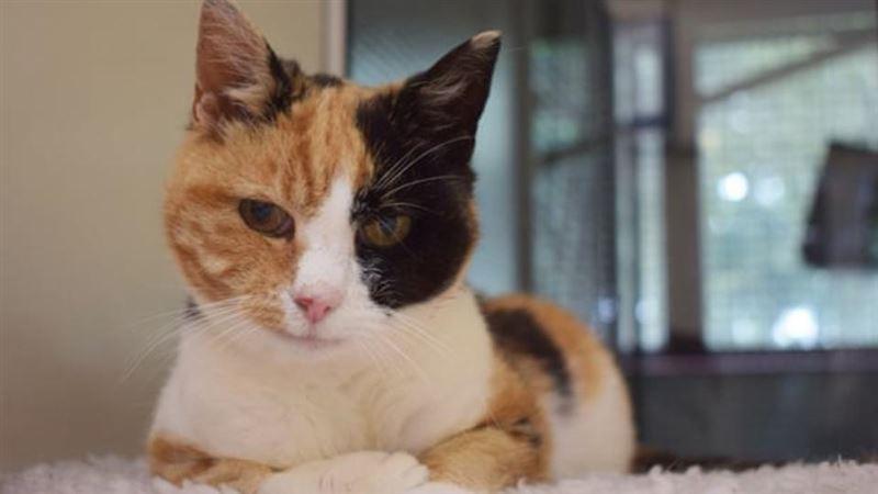 Хозяева нашли пропавшую кошку спустя 12 лет и не стали ее забирать