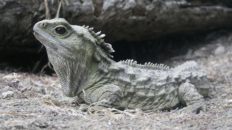 Ученые обнаружили живых ближайших родственников динозавров