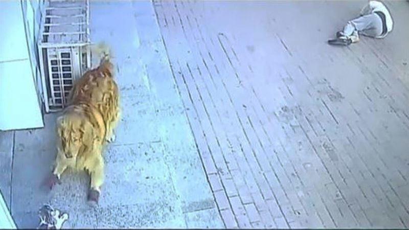 Пенсионер потерял сознание после того, как на него упала кошка