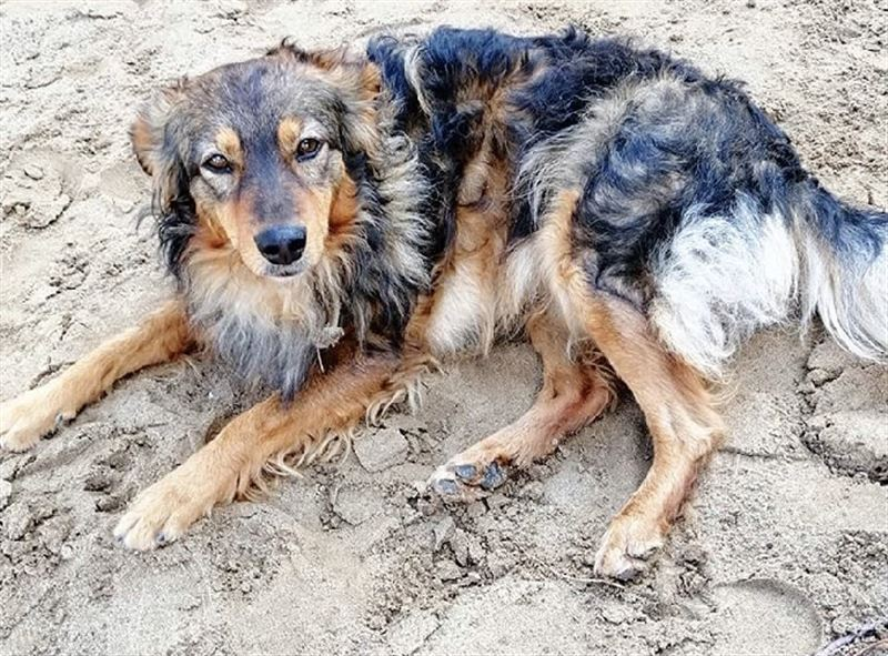 Живодеры забили гвозди в голову собаке и сломали лапы