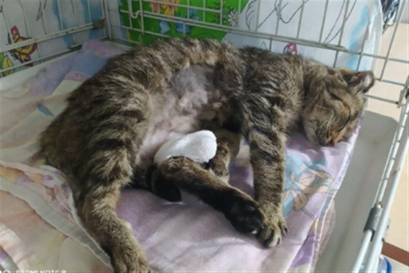 Волонтеры спасли пострадавшую от рук живодеров кошку в Усть-Каменогорске