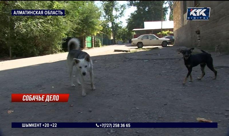 Люди и собаки пытаются уживаться вместе в Талгаре