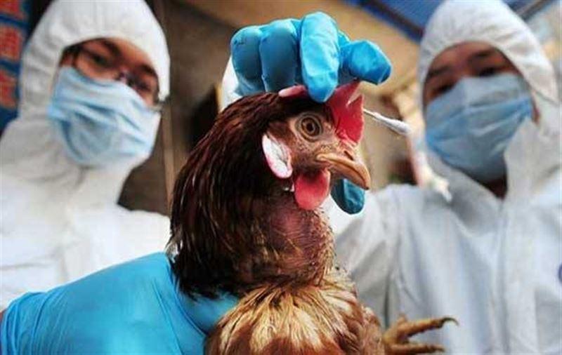 Вспышку птичьего гриппа зафиксировали в Казахстане