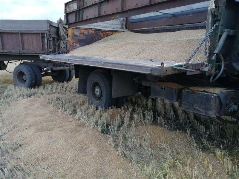 Свыше 10 тонн зерна украл житель СКО