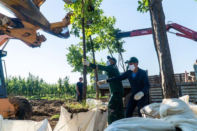 Вдвое увеличили компенсационную посадку при вырубке деревьев в Нур-Султане