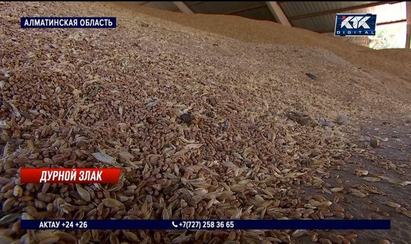 «Вот и считайте»: пшеница подорожала на 25%, на сколько подорожает хлеб?