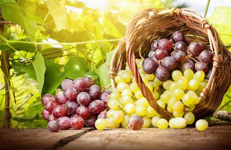 Раскрыта опасность винограда
