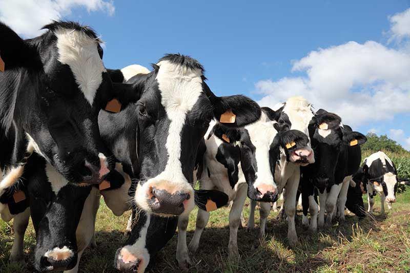 Пресечена попытка перевоза крупной партии скота из Казахстана в Кыргазстан