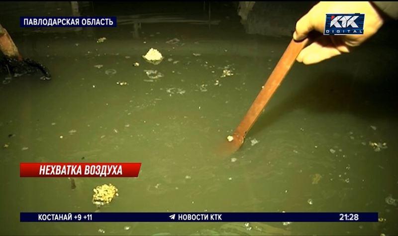 «Три поросенка» new: в Экибастузе канализационные стоки топят подвалы
