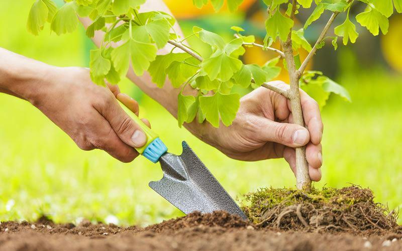 Более 300 деревьев планируют посадить в Актау