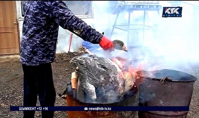 В СКО птицеводам не выплатили деньги за самостоятельно сожженных пернатых