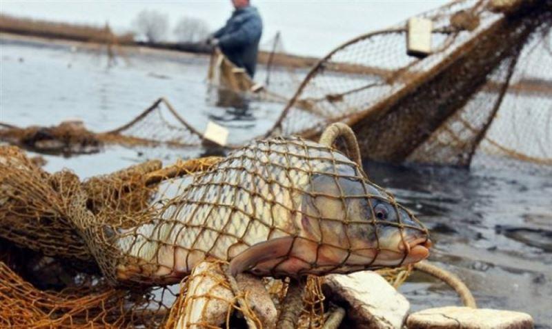 На 20 млн тенге оштрафовали браконьеров в Атырауской области