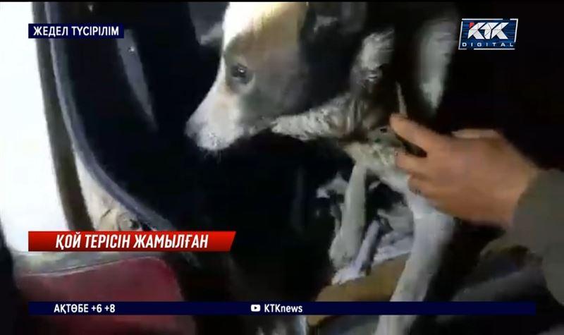 Алматы облысында лауазымды испектор браконьерлікпен айналысқан