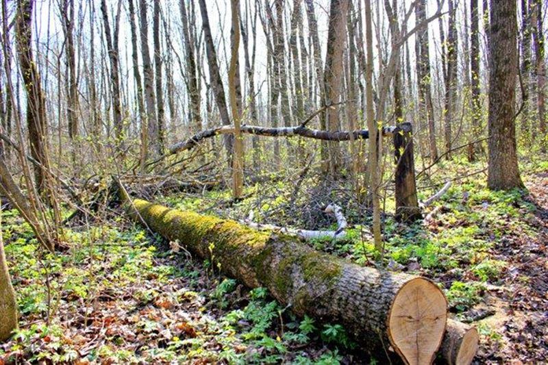 Пропавшего мужчину обнаружили в лесу Карагандинской области