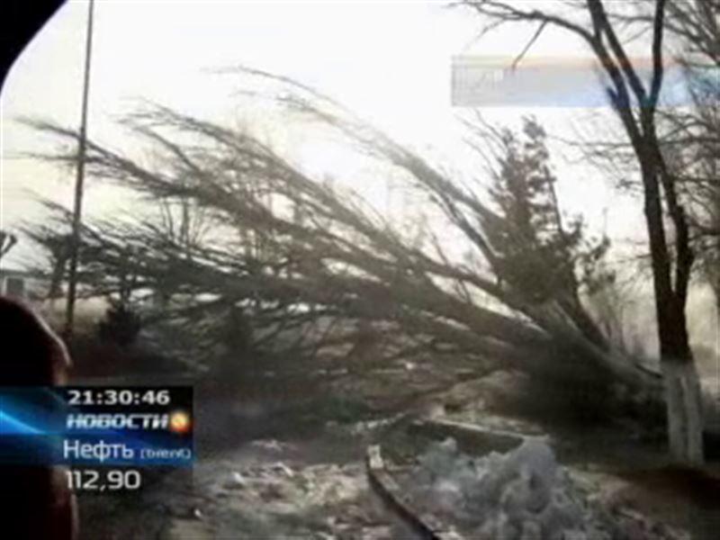 Размер ущерба после мощного урагана в Жамбылской области оценили в 200 миллионов