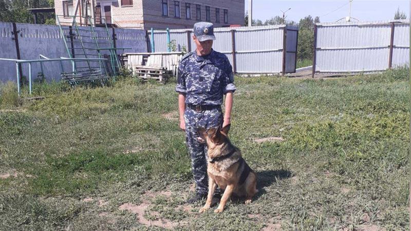 Четыре убийства помогли раскрыть служебно-розыскные собаки в СКО