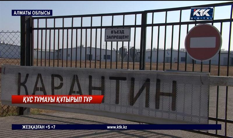 Құс тұмауы қайта өршіді: Алматы облысындағы ең ірі құс фабрикасында қанаттылар қырылып жатыр