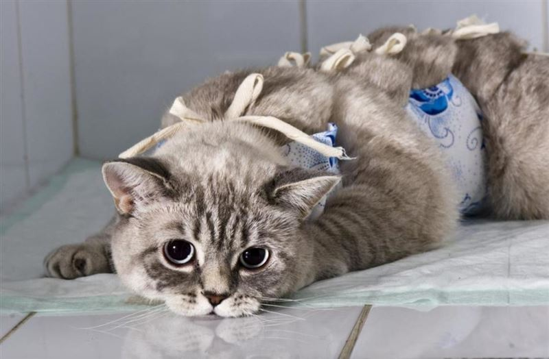 В столице бесплатно стерилизуют 4000 бродячих собак и кошек