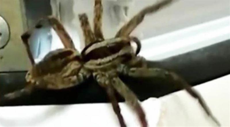 Дачник потерял обе ноги после укуса паука