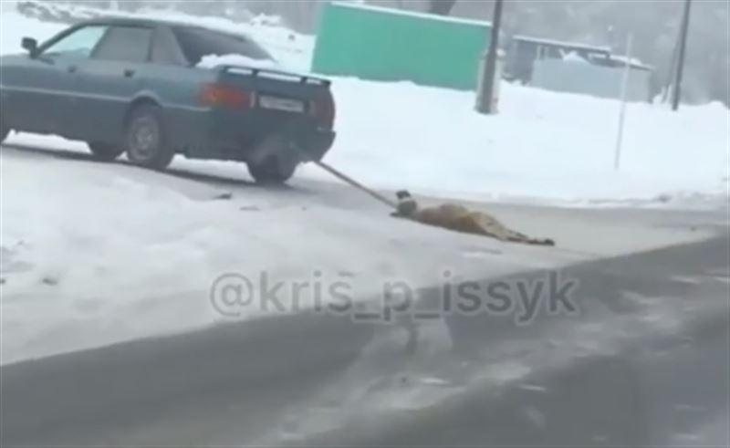 Собаку привязали к машине и протащили по дороге