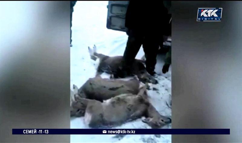 Ради забавы: браконьеры убили шесть косуль в Актюбинской области