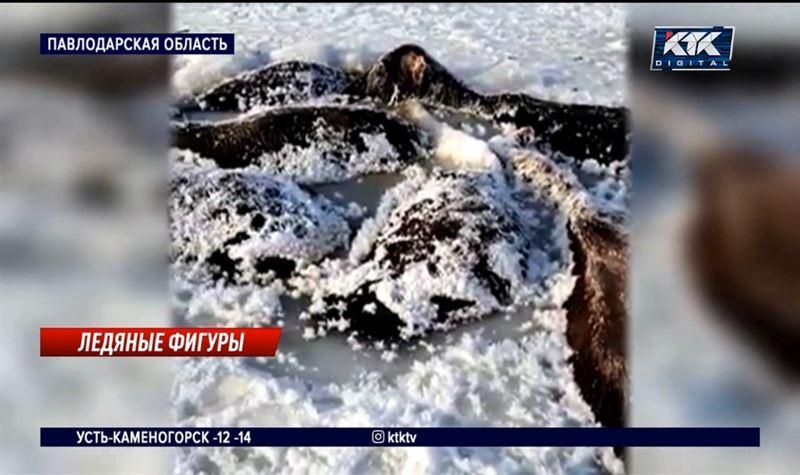 26 лошадей погибли, провалившись под лед на озере