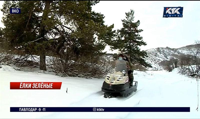 Передвижные кордоны в ВКО не дают вырубать елки