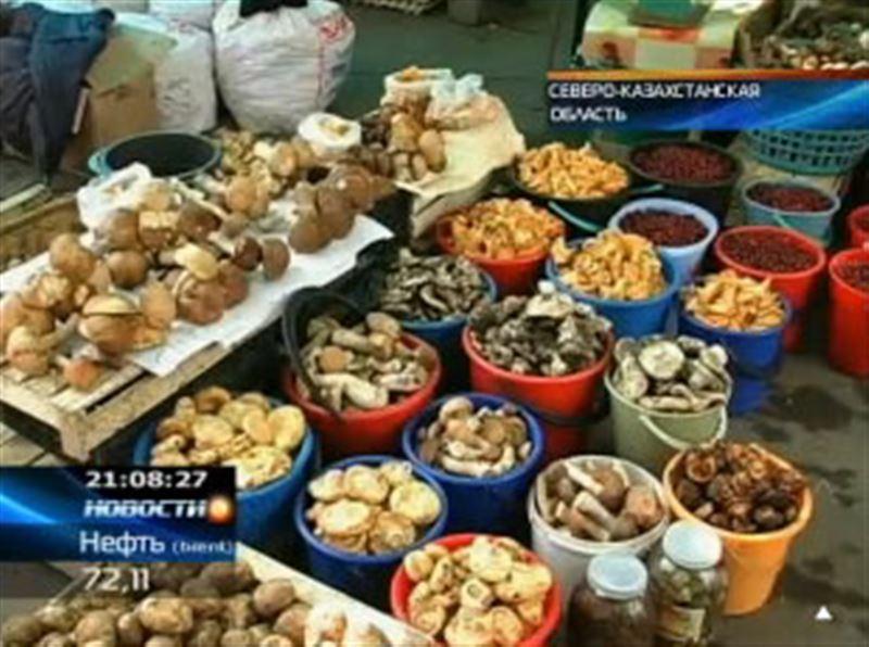 На севере республики небывалый урожай грибов