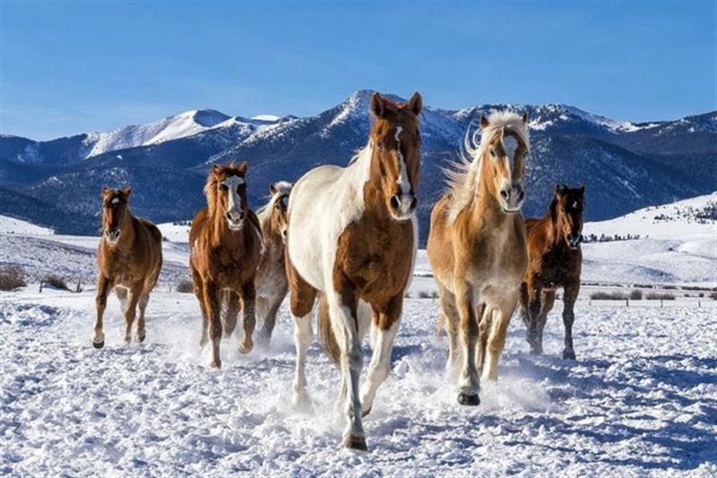 Поезд насмерть сбил пятерых лошадей в Павлодарской области