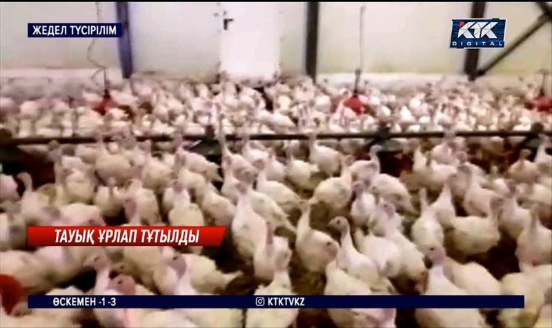 Түркістан облысында құс фабрикасынан жүзден астам күркетауық ұрлаған