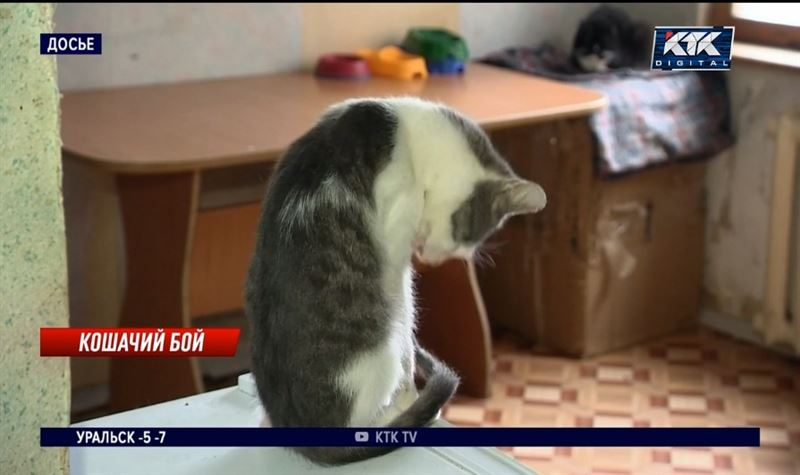 Кошки и собаки не могут заразить человека ковидом, утверждают врачи