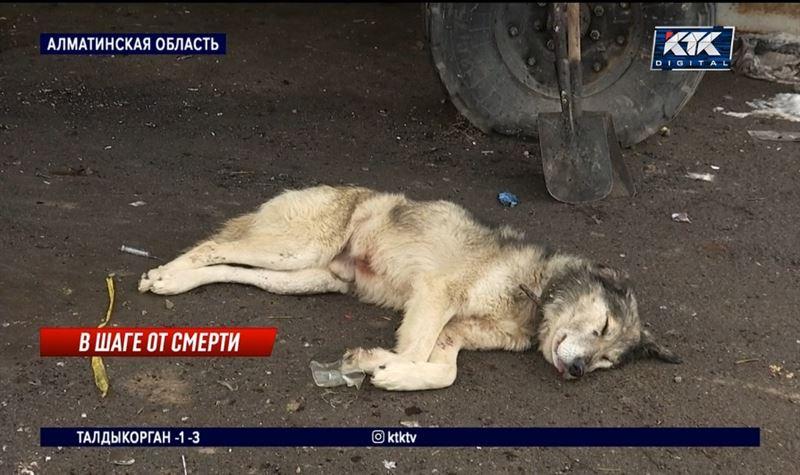 Трупы и обгоревшие останки собак обнаружены на ветстанции Алматинской области