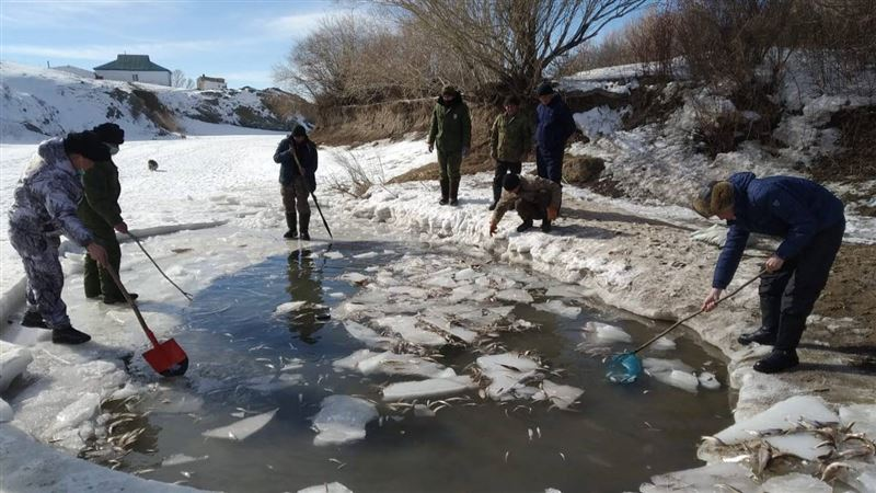 На востоке Казахстана массово гибнет рыба