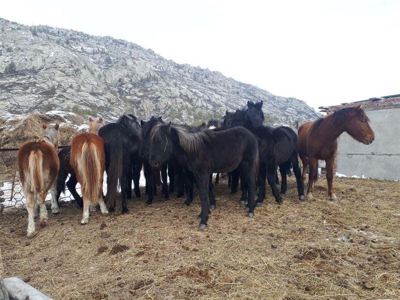 На востоке Казахстана хозяину вернули 19 пропавших лошадей