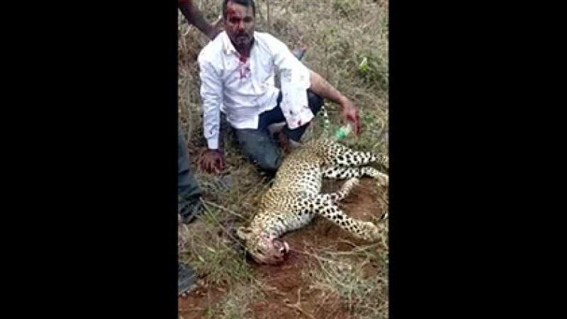 Ер адам шабуыл жасаған леопардты жалаң қолымен өлтірді