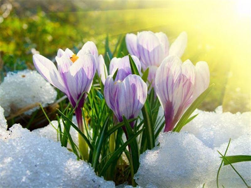Какая погода ожидается в Казахстане в первый день весны