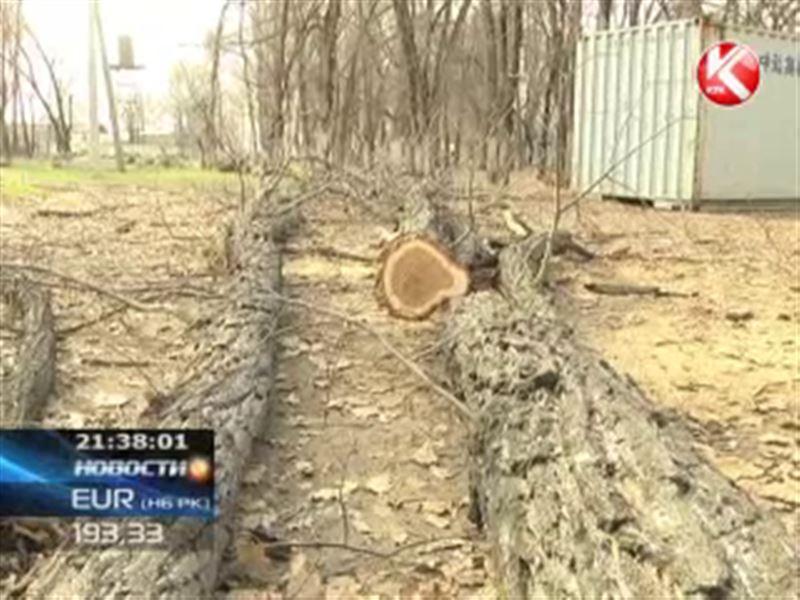 В Алматинской области на грани вырубки оказалась вековая роща
