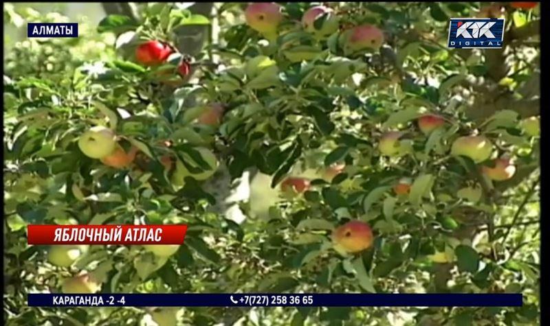 «Чтобы деньги не ушли в карман»: специалисты боятся, что идея возрождения яблоневых садов провалится