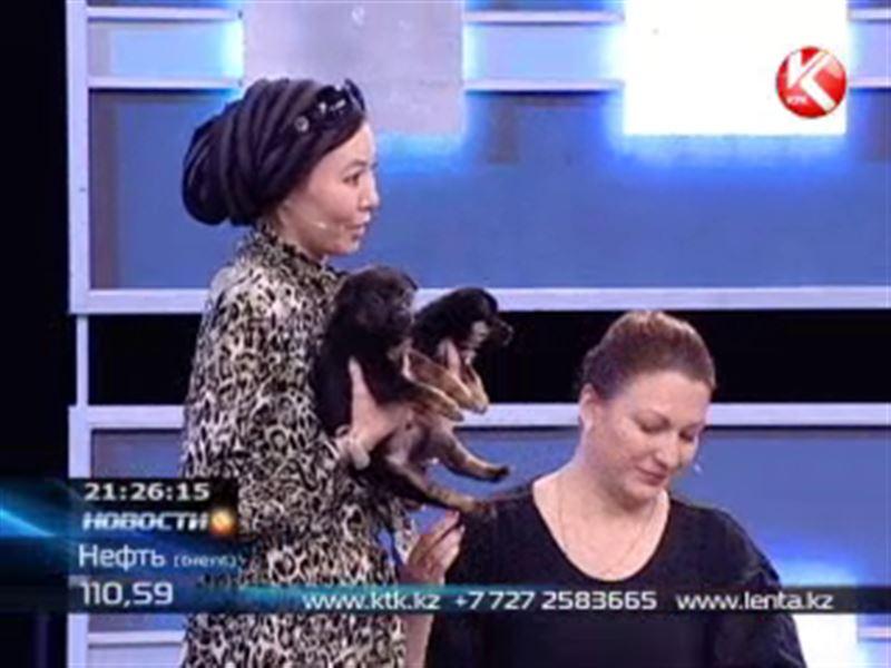 Как заработать на собаках – в ток-шоу «Наша правда»